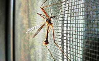 Установить москитную сетку на окно – как это сделать?